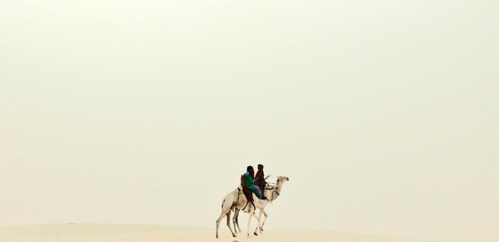 camel2-1430418034-77.png